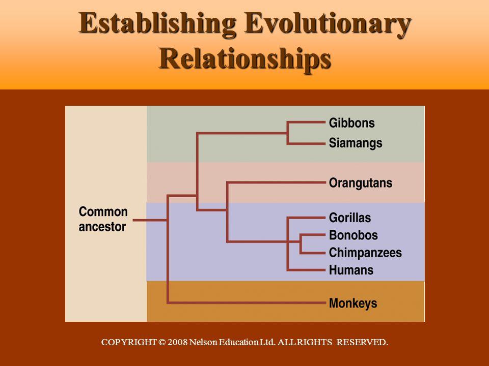 COPYRIGHT © 2008 Nelson Education Ltd. ALL RIGHTS RESERVED. Establishing Evolutionary Relationships