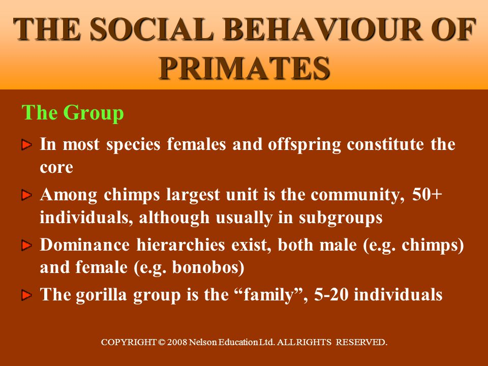 COPYRIGHT © 2008 Nelson Education Ltd. ALL RIGHTS RESERVED. THE SOCIAL BEHAVIOUR OF PRIMATES The Group In most species females and offspring constitut