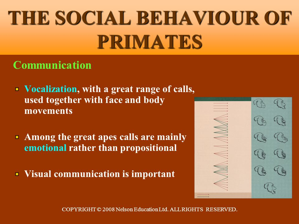 COPYRIGHT © 2008 Nelson Education Ltd. ALL RIGHTS RESERVED. THE SOCIAL BEHAVIOUR OF PRIMATES Communication Vocalization, with a great range of calls,