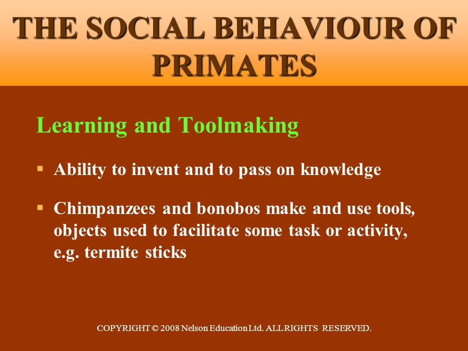 COPYRIGHT © 2008 Nelson Education Ltd. ALL RIGHTS RESERVED. THE SOCIAL BEHAVIOUR OF PRIMATES Learning and Toolmaking  Ability to invent and to pass o