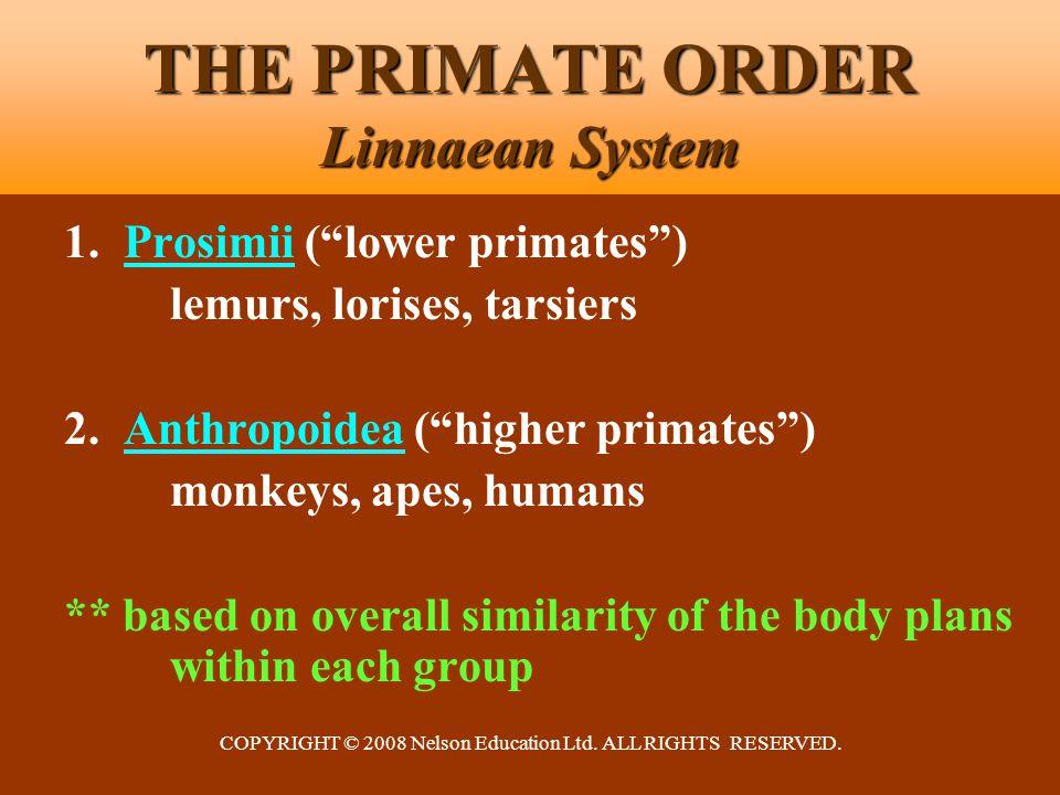 "COPYRIGHT © 2008 Nelson Education Ltd. ALL RIGHTS RESERVED. THE PRIMATE ORDER Linnaean System 1. Prosimii (""lower primates"") lemurs, lorises, tarsiers"