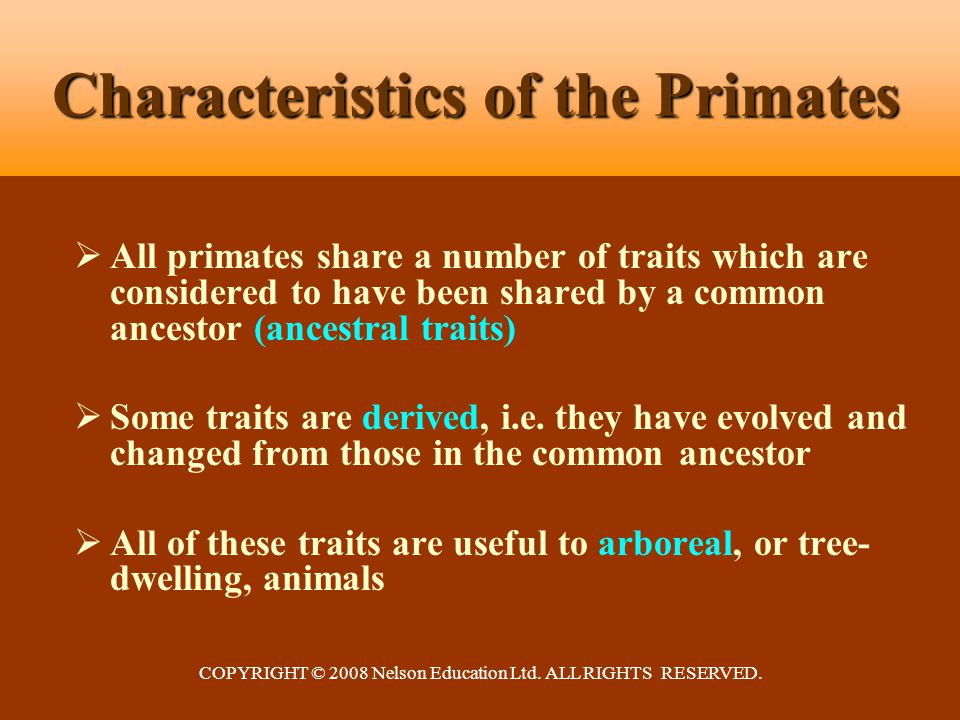 COPYRIGHT © 2008 Nelson Education Ltd. ALL RIGHTS RESERVED. Characteristics of the Primates  All primates share a number of traits which are consider