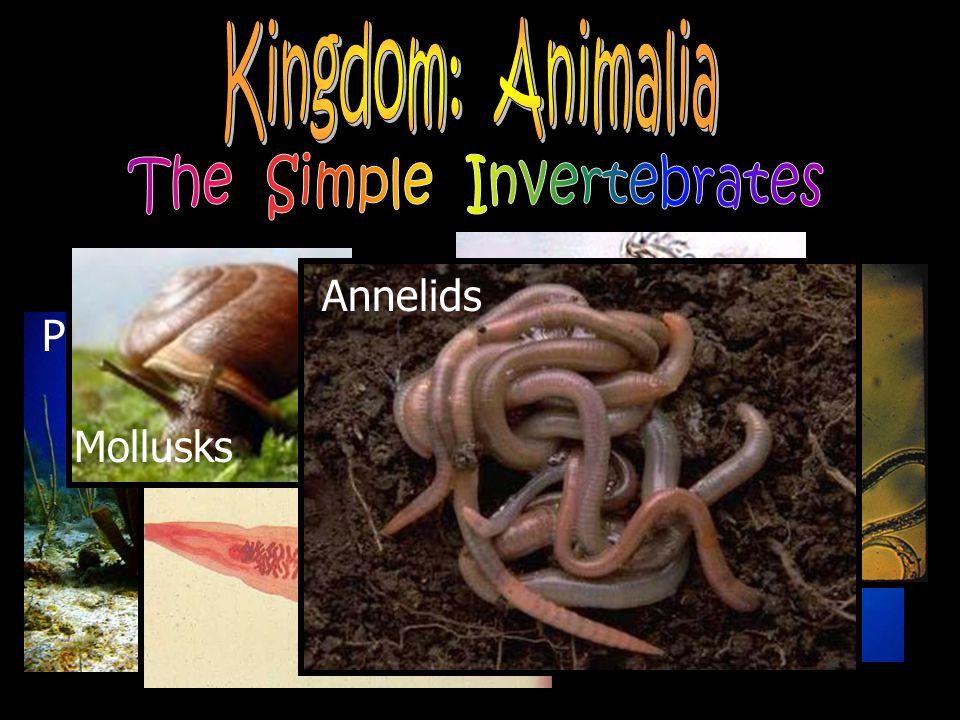 Porifera Cnidarians Platyhelminthes Nematoda Rotifera Mollusks Annelids