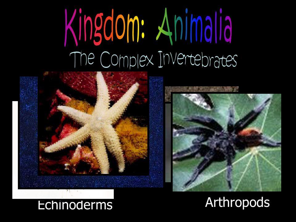 Arthropods Echinoderms