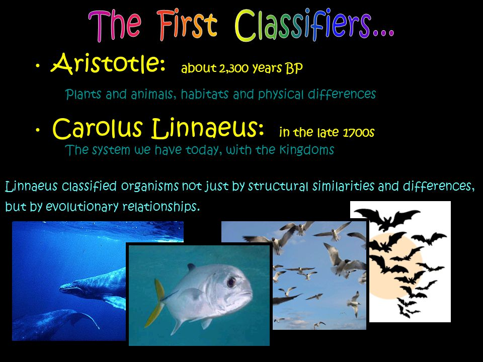 Aristotle: about 2,300 years BP Plants and animals, habitats and physical differences Carolus Linnaeus: in the late 1700s The system we have today, wi