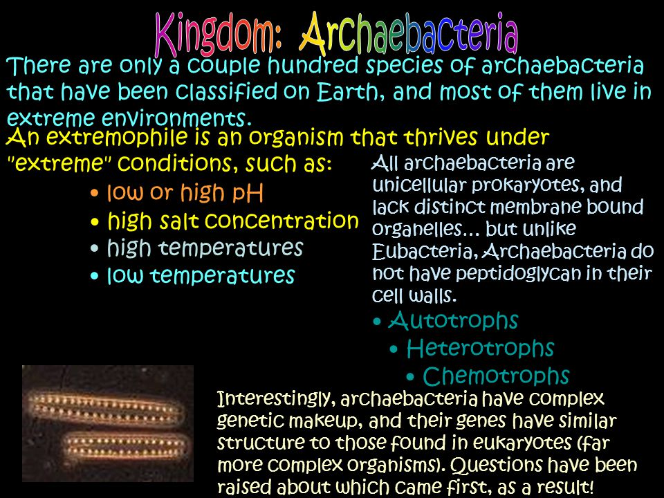 There are only a couple hundred species of archaebacteria that have been classified on Earth, and most of them live in extreme environments. An extrem