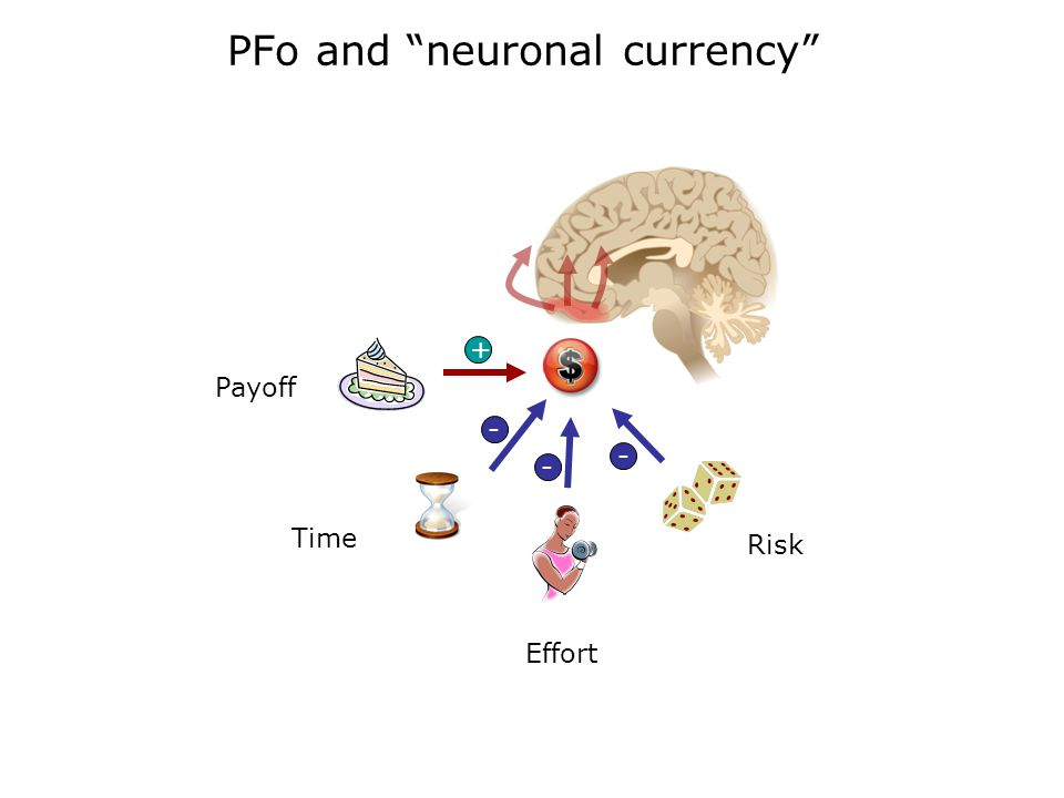 PFo and neuronal currency Payoff + Time Effort Risk - - - +
