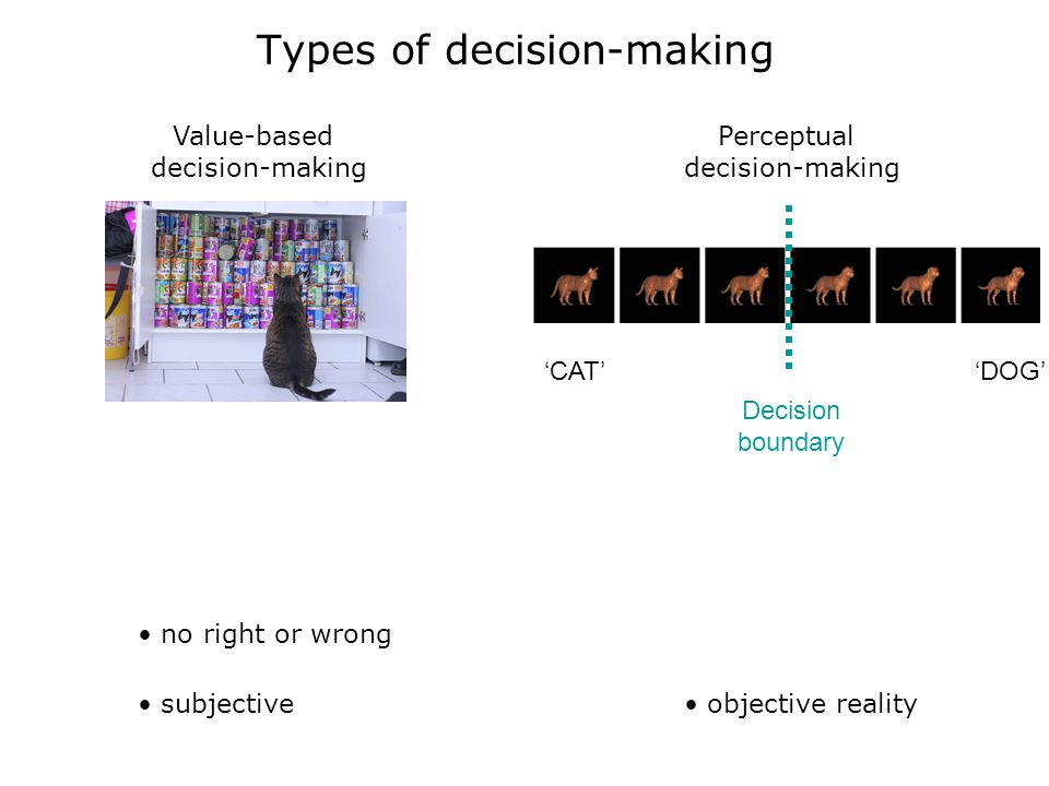 Types of decision-making Value-based decision-making no right or wrong subjective objective reality Perceptual decision-making Decision boundary 'CAT''DOG'