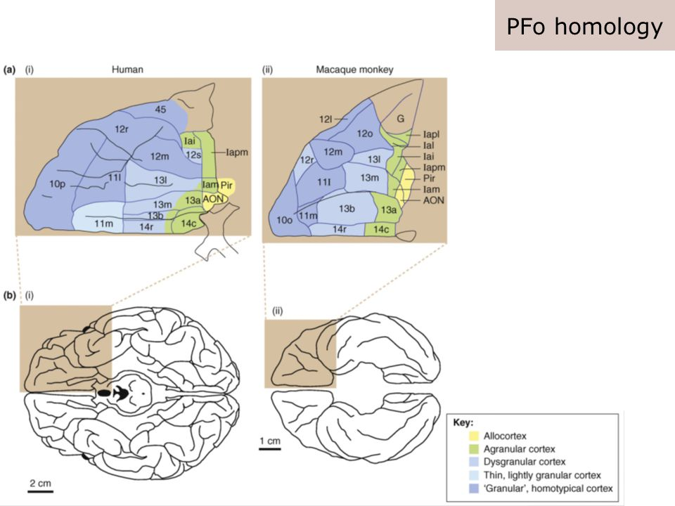 Conclusion Emotional/Social dysfunction Reward processing Behavioral and clinical level Single neuron, genetic and pharmacological level