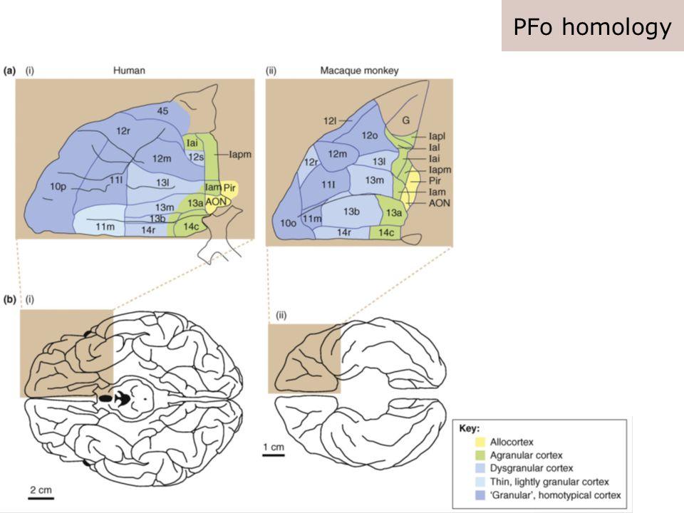 PFm homology