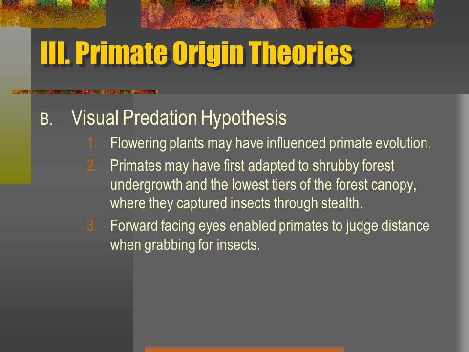 III. Primate Origin Theories B.