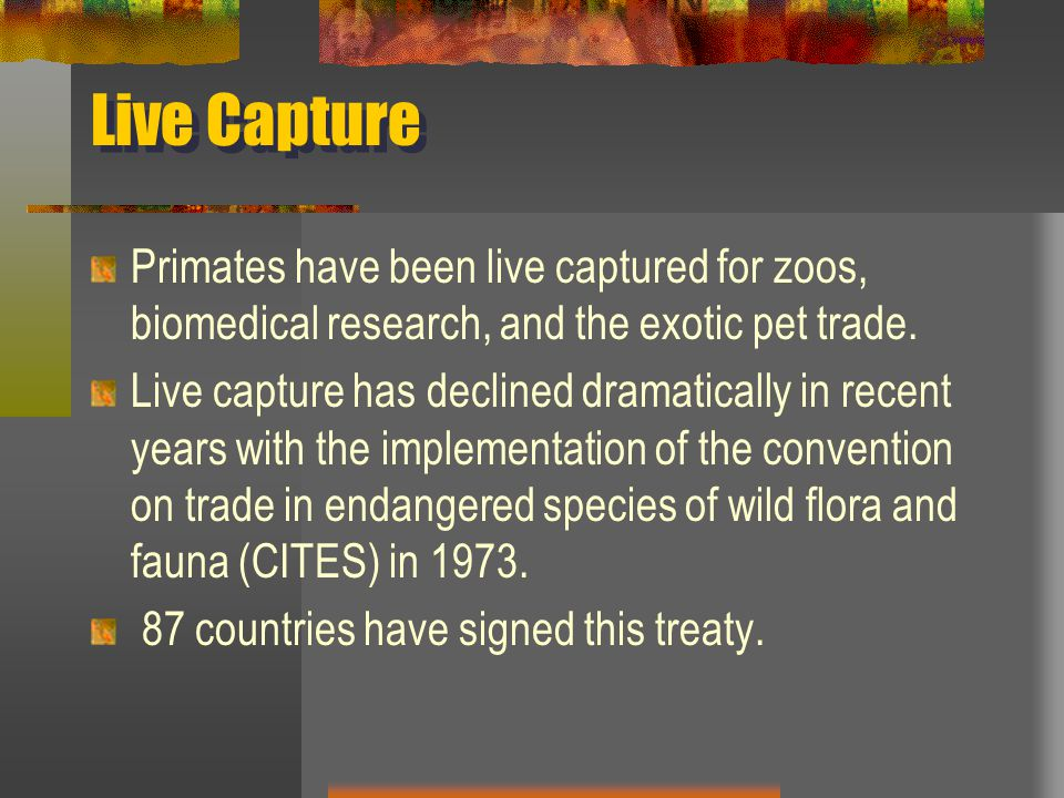 Live Capture Primates have been live captured for zoos, biomedical research, and the exotic pet trade.