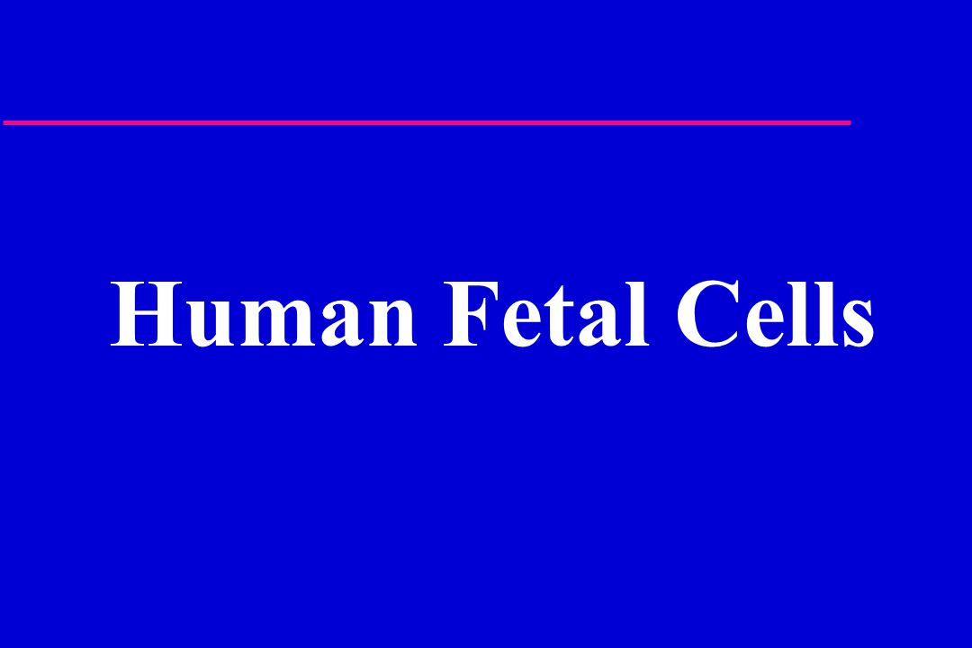 Human Fetal Cells