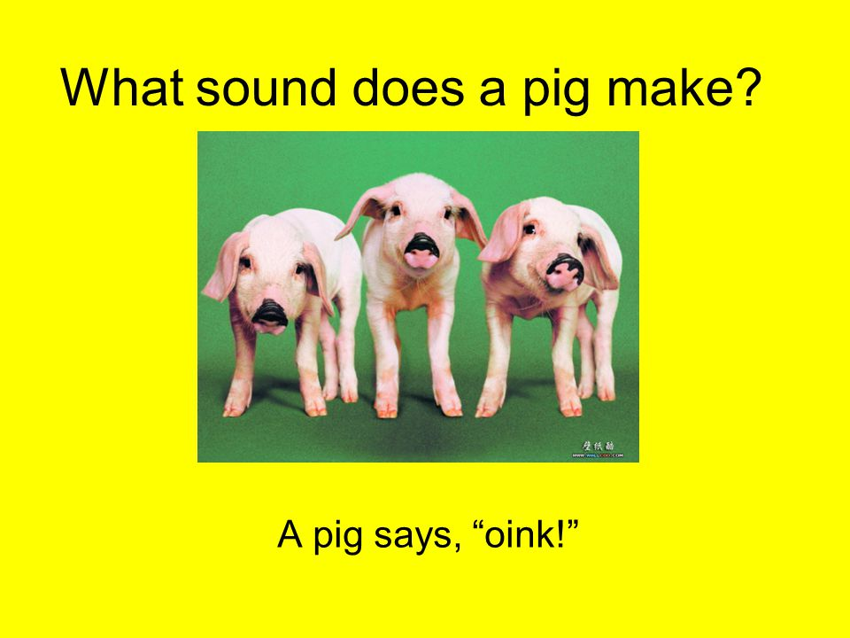 "What sound does a pig make? A pig says, ""oink!"""