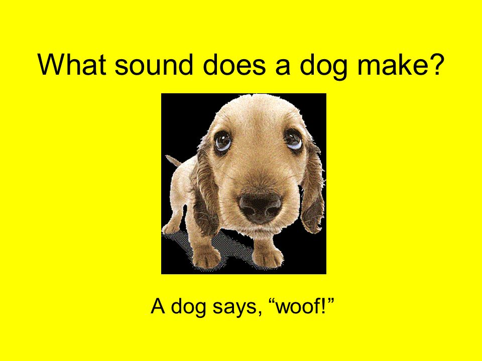 "What sound does a dog make? A dog says, ""woof!"""