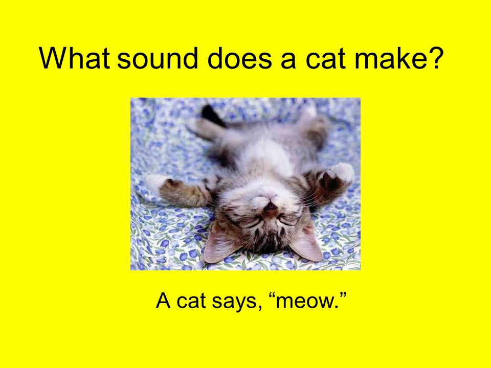 "What sound does a cat make? A cat says, ""meow."""