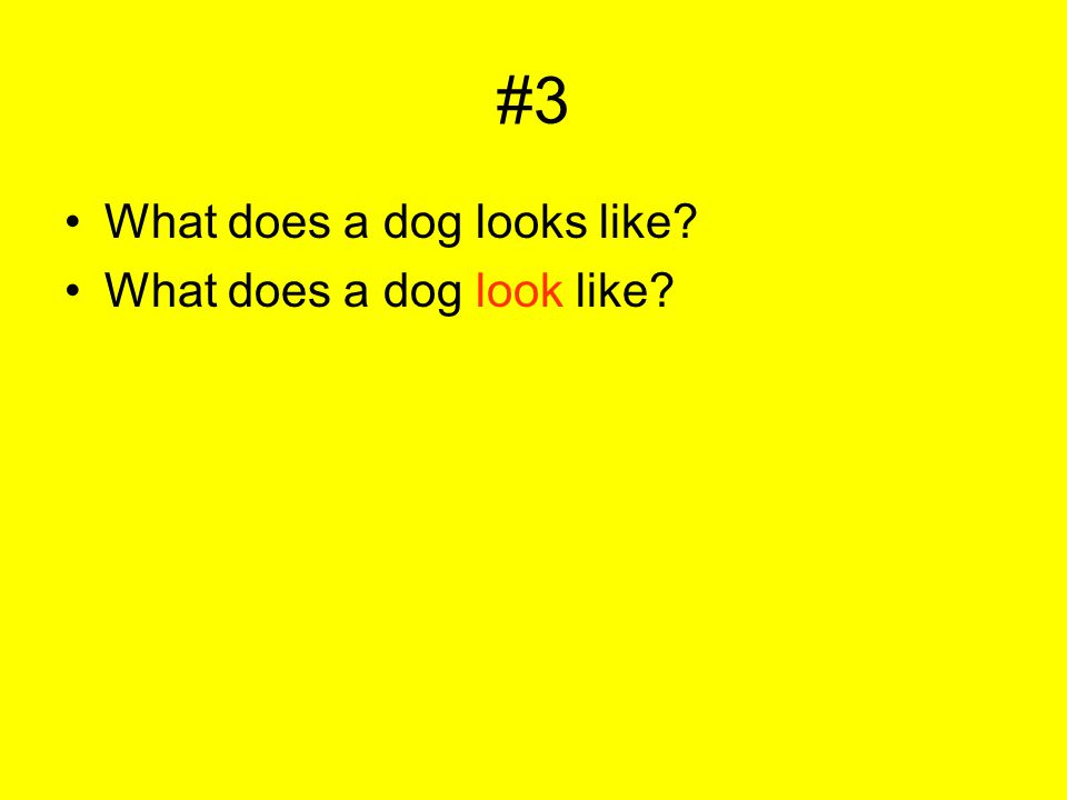 #3 What does a dog looks like? What does a dog look like?