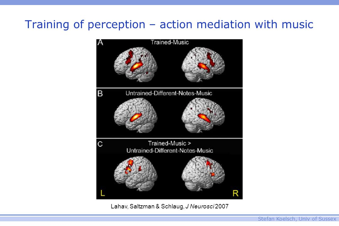 Stefan Koelsch, Univ of Sussex Training of perception – action mediation with music Lahav, Saltzman & Schlaug, J Neurosci 2007