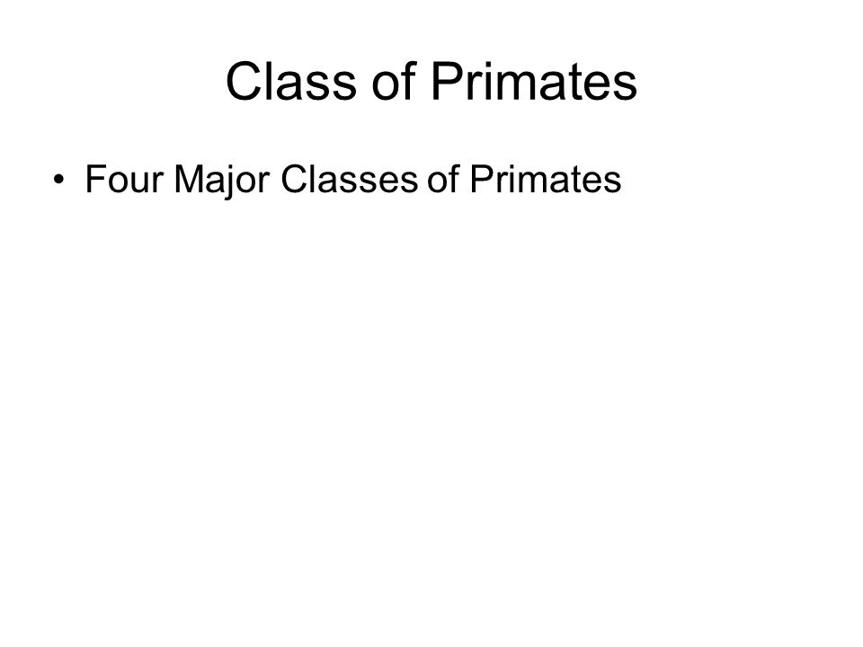 Class of Primates Four Major Classes of Primates