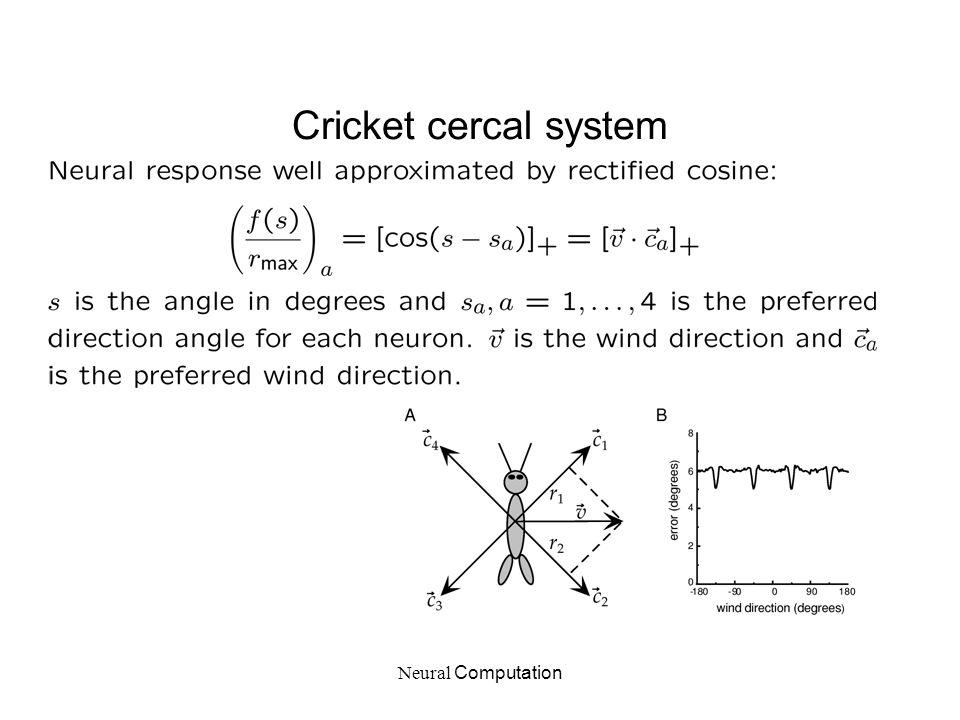 Neural Computation Cricket cercal system