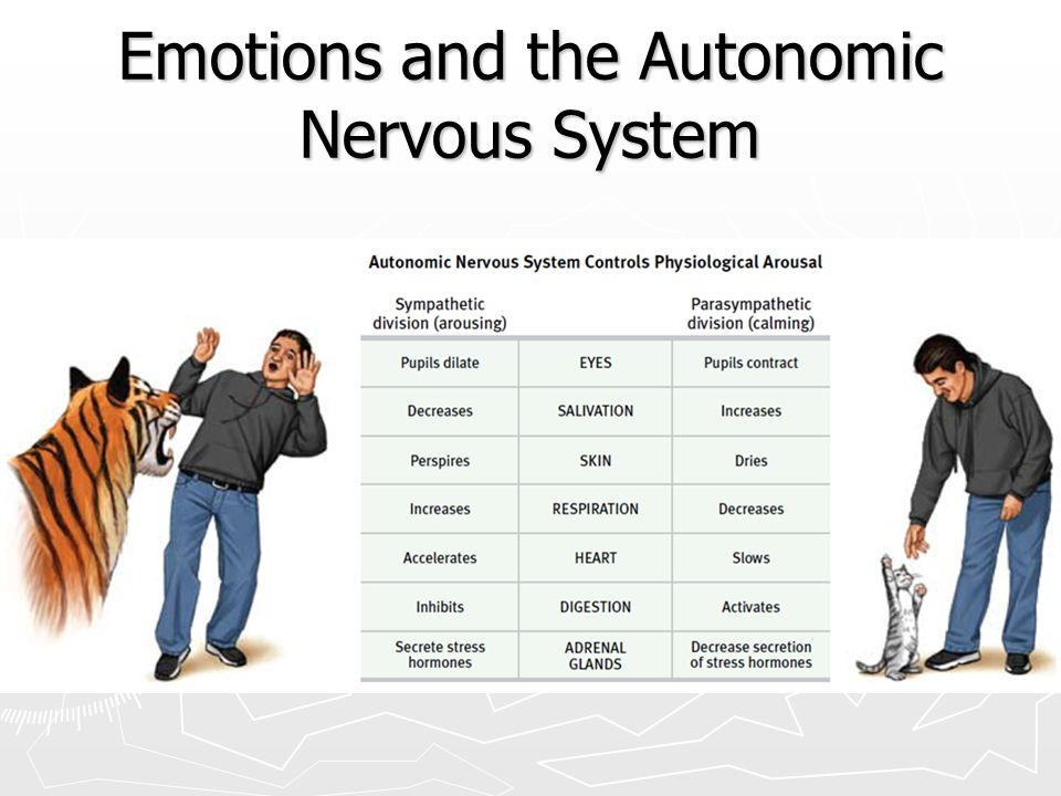 Emotions and the Autonomic Nervous System ► Autonomic nervous system  Sympathetic nervous system ► arousing  Parasympathetic nervous system ► Calmin