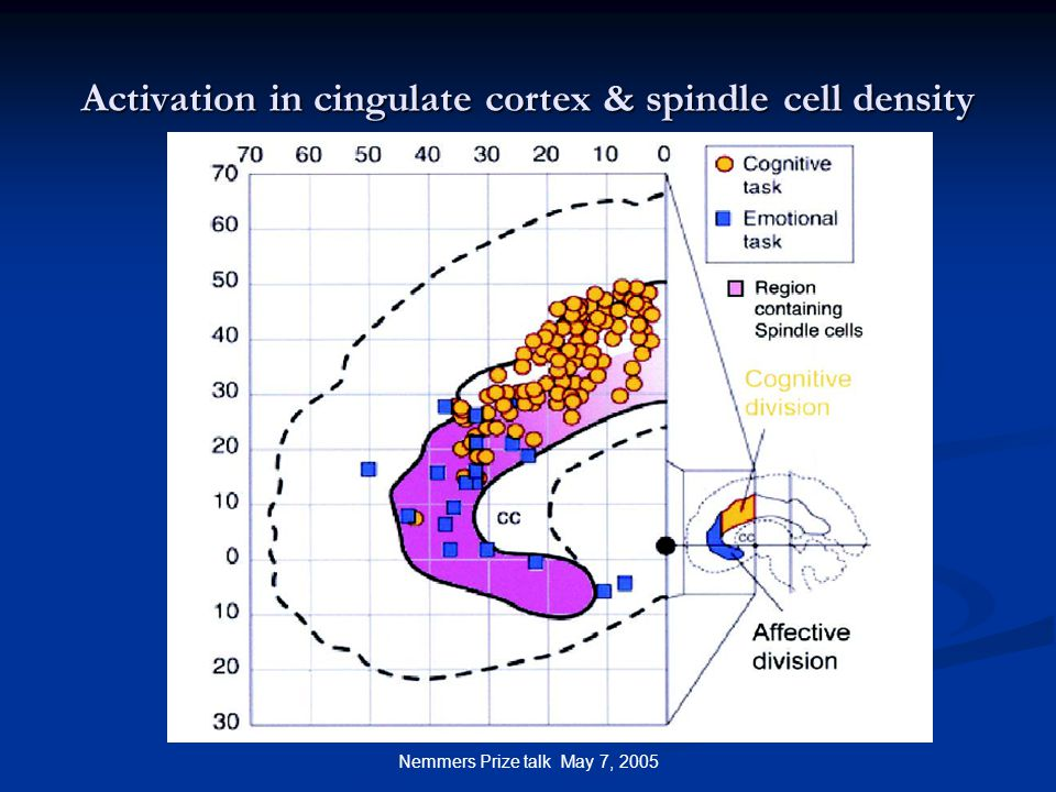Nemmers Prize talk May 7, 2005 Activation in cingulate cortex & spindle cell density