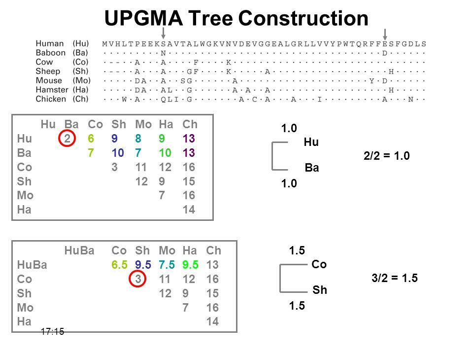 HuBaCoShMoHaCh Hu2698913 Ba71071013 Co3111216 Sh12915 Mo716 Ha14 HuBaCoShMoHaCh HuBa6.59.57.59.513 Co3111216 Sh12915 Mo716 Ha14 Hu Ba 2/2 = 1.0 1.0 Co Sh 3/2 = 1.5 1.5 1.0 1.5 UPGMA Tree Construction 17:17