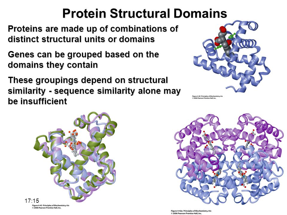 Protein Structural Domains Proteins are made up of combinations of distinct structural units or domains Genes can be grouped based on the domains they contain These groupings depend on structural similarity - sequence similarity alone may be insufficient 17:17