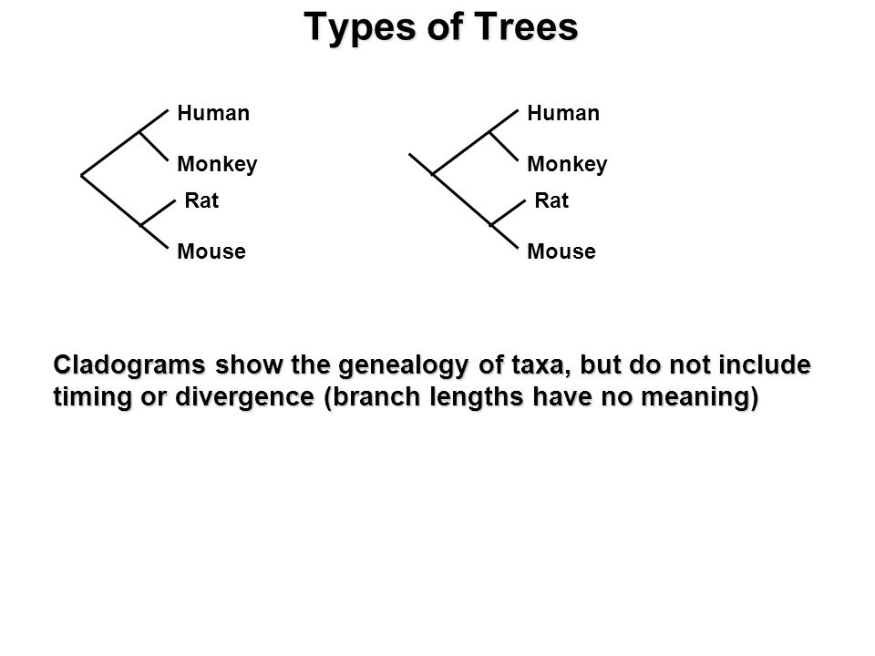 Types of Trees Cladograms show the genealogy of taxa, but do not include timing or divergence (branch lengths have no meaning) Human Monkey Rat Mouse Human Monkey Rat Mouse