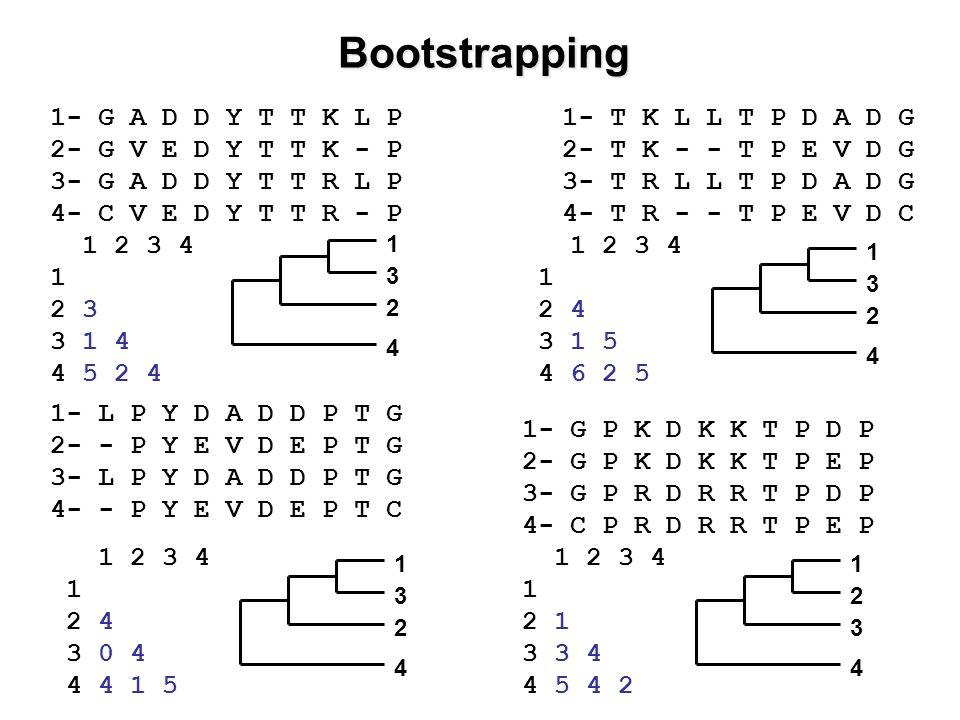 Bootstrapping 1- G A D D Y T T K L P 2- G V E D Y T T K - P 3- G A D D Y T T R L P 4- C V E D Y T T R - P 1- T K L L T P D A D G 2- T K - - T P E V D G 3- T R L L T P D A D G 4- T R - - T P E V D C 1- G P K D K K T P D P 2- G P K D K K T P E P 3- G P R D R R T P D P 4- C P R D R R T P E P 1- L P Y D A D D P T G 2- - P Y E V D E P T G 3- L P Y D A D D P T G 4- - P Y E V D E P T C 1 2 3 4 1 2 3 3 1 4 4 5 2 4 1 3 2 4 1 2 3 4 1 2 4 3 1 5 4 6 2 5 1 3 2 4 1 2 3 4 1 2 4 3 0 4 4 4 1 5 1 3 2 4 1 2 3 4 1 2 1 3 3 4 4 5 4 2 1 2 3 4
