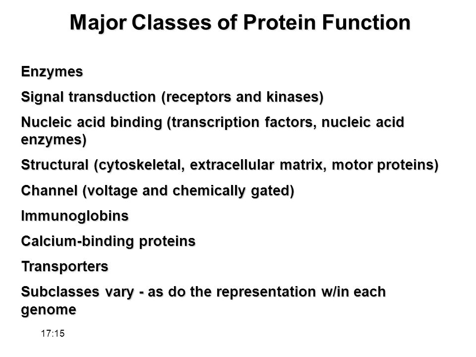 Major Classes of Protein Function Enzymes Signal transduction (receptors and kinases) Nucleic acid binding (transcription factors, nucleic acid enzymes) Structural (cytoskeletal, extracellular matrix, motor proteins) Channel (voltage and chemically gated) Immunoglobins Calcium-binding proteins Transporters Subclasses vary - as do the representation w/in each genome 17:17