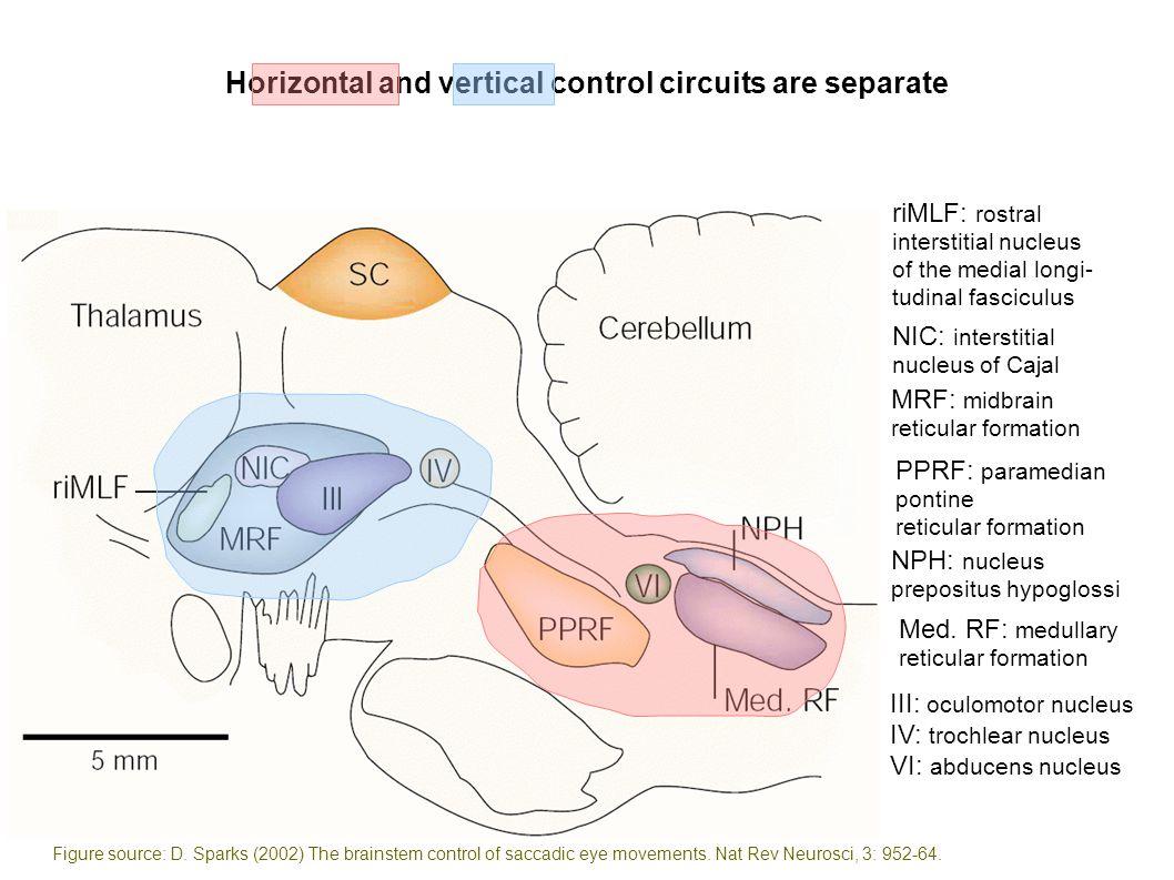 NIC: interstitial nucleus of Cajal riMLF: rostral interstitial nucleus of the medial longi- tudinal fasciculus MRF: midbrain reticular formation PPRF: paramedian pontine reticular formation NPH: nucleus prepositus hypoglossi Med.