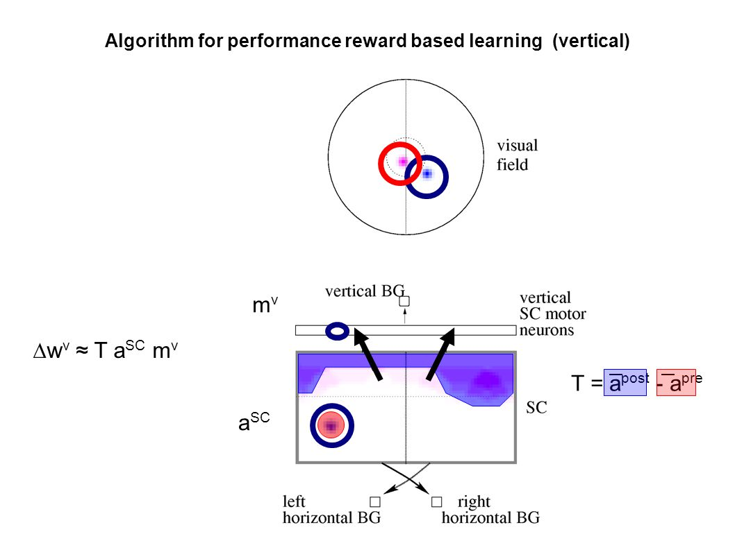 Algorithm for performance reward based learning (vertical) ∆w v ≈ T a SC m v T = a post - a pre mvmv a SC