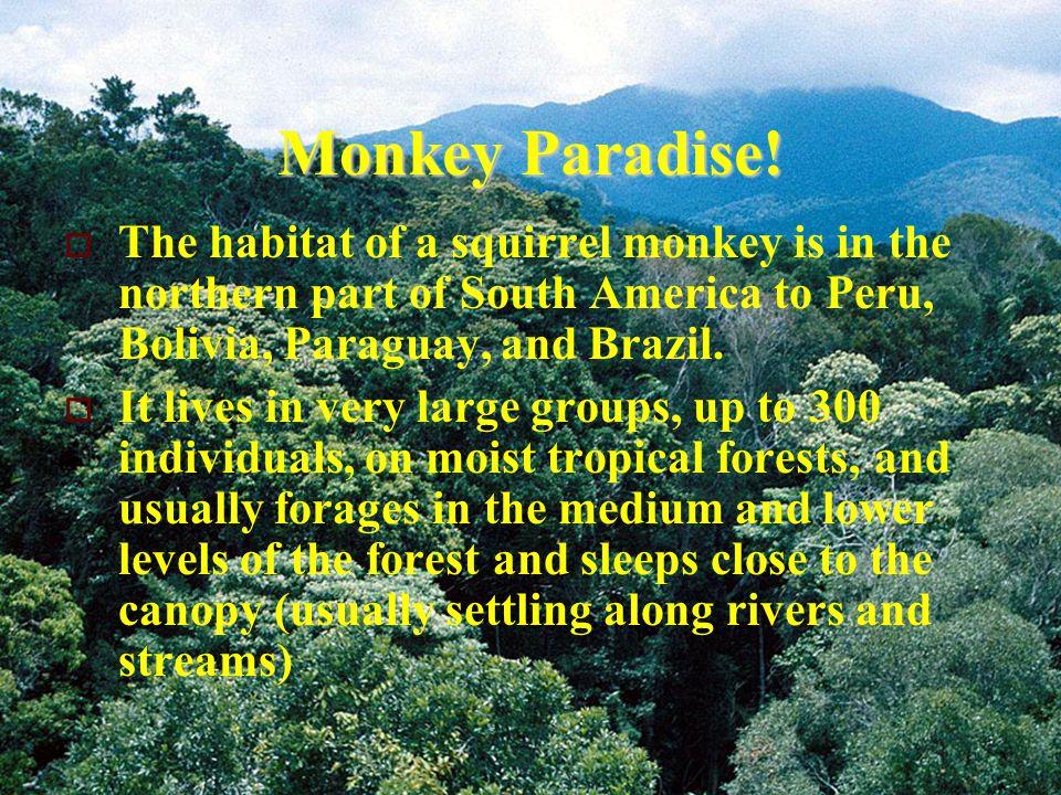 Monkey Paradise.