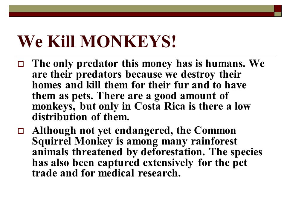 We Kill MONKEYS. The only predator this money has is humans.