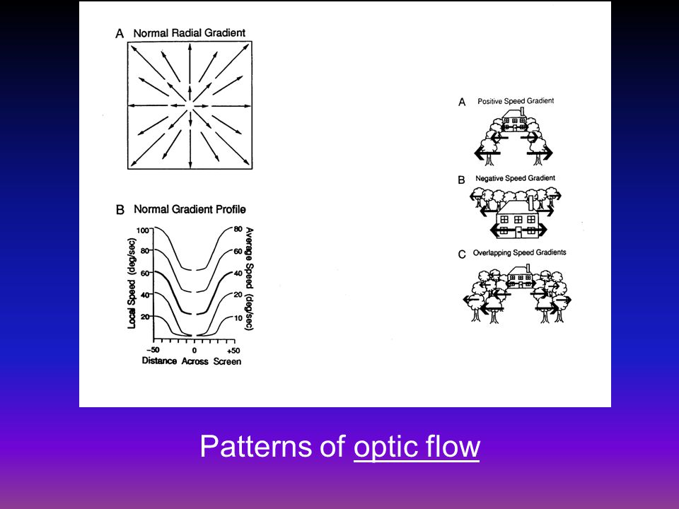 Patterns of optic flow