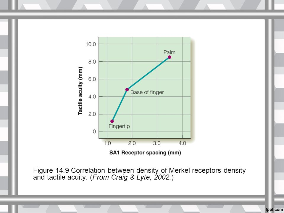 Figure 14.9 Correlation between density of Merkel receptors density and tactile acuity.