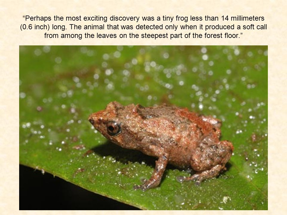 """Perhaps the most exciting discovery was a tiny frog less than 14 millimeters (0.6 inch) long. The animal that was detected only when it produced a so"