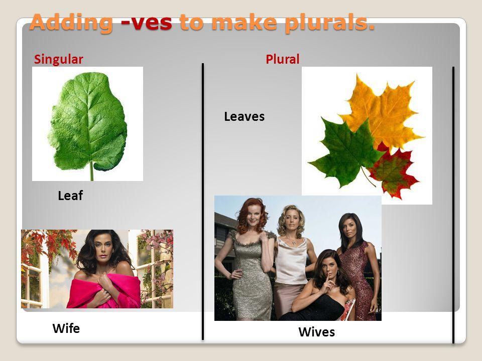 Adding -ves to make plurals. Leaf Wife Leaves Wives SingularPlural