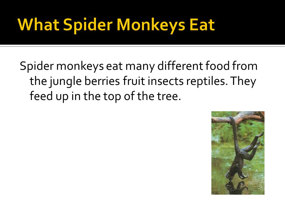  Spider monkeys are amazing mammals.
