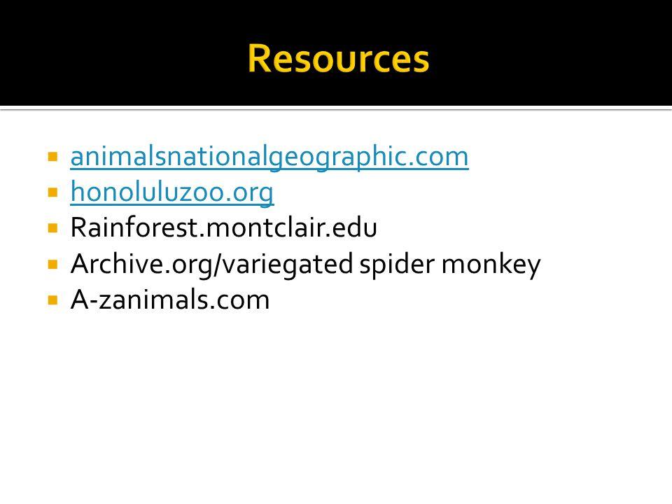  animalsnationalgeographic.com animalsnationalgeographic.com  honoluluzoo.org honoluluzoo.org  Rainforest.montclair.edu  Archive.org/variegated spider monkey  A-zanimals.com