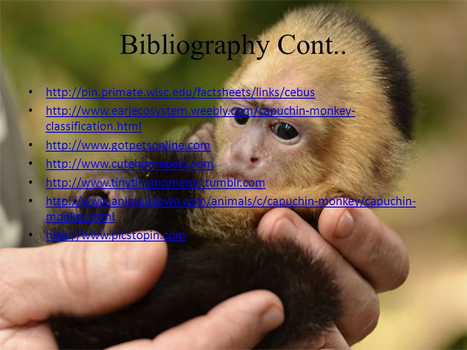 Bibliography Cont..