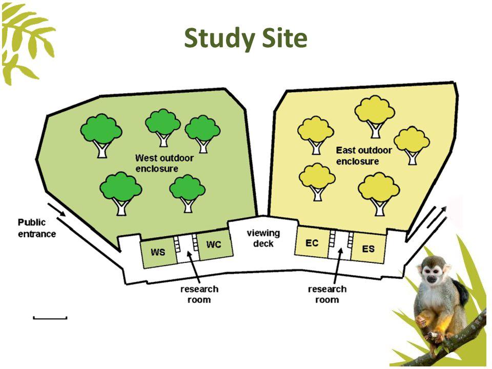 Study Site