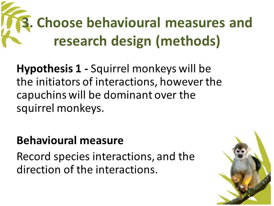 3. Choose behavioural measures and research design (methods) Hypothesis 1 - Squirrel monkeys will be the initiators of interactions, however the capuc