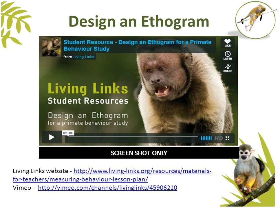 Design an Ethogram SCREEN SHOT ONLY Living Links website - http://www.living-links.org/resources/materials- for-teachers/measuring-behaviour-lesson-plan/http://www.living-links.org/resources/materials- for-teachers/measuring-behaviour-lesson-plan/ Vimeo - http://vimeo.com/channels/livinglinks/45906210http://vimeo.com/channels/livinglinks/45906210