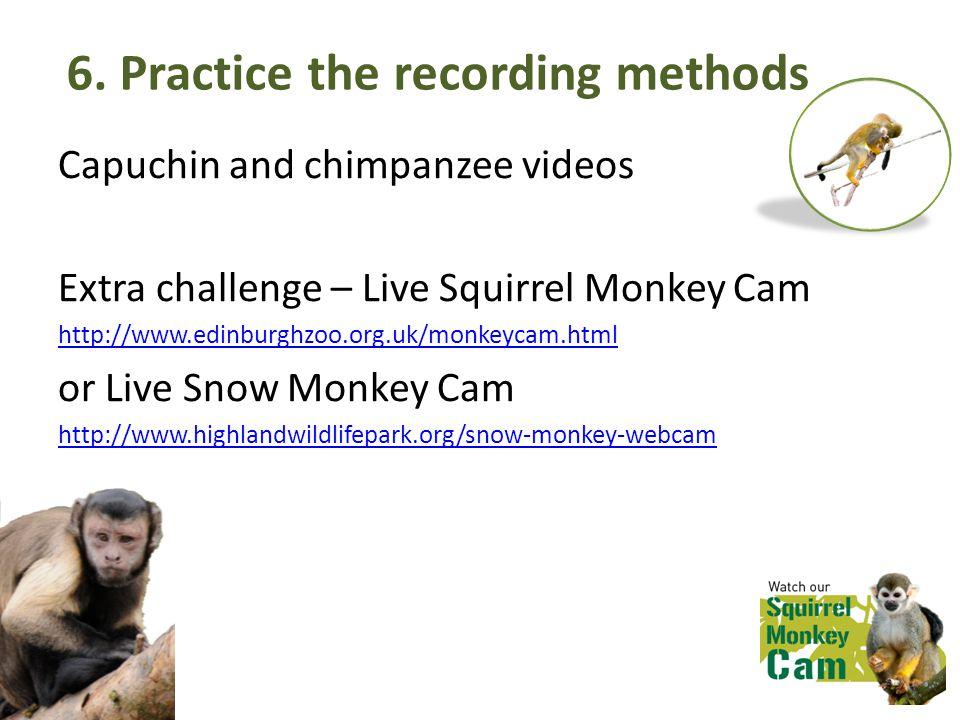 6. Practice the recording methods Capuchin and chimpanzee videos Extra challenge – Live Squirrel Monkey Cam http://www.edinburghzoo.org.uk/monkeycam.h