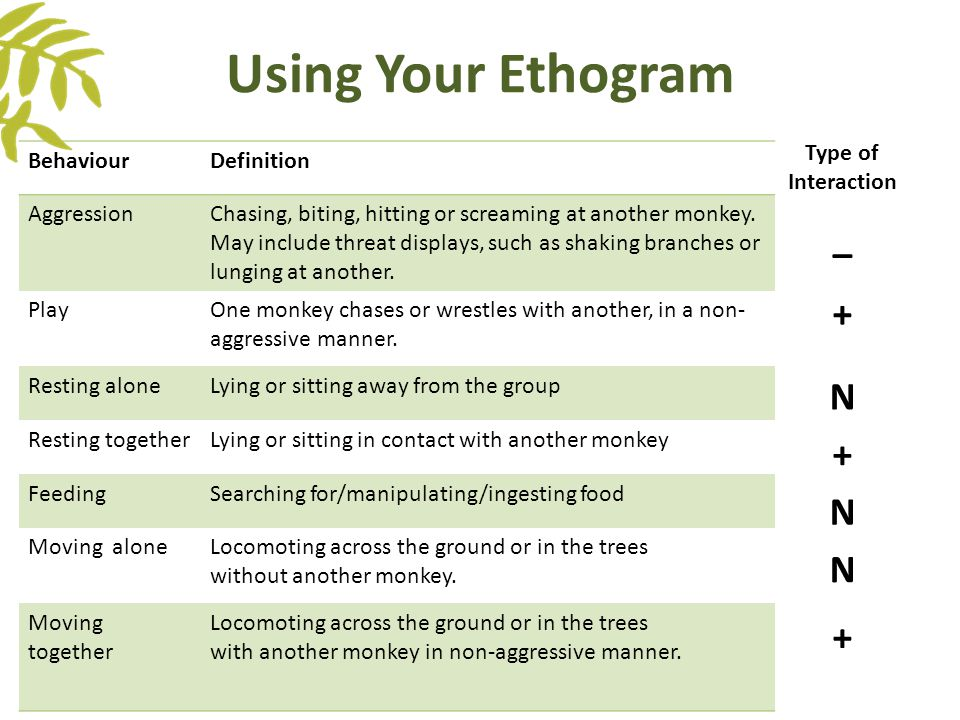 Using Your Ethogram BehaviourDefinition AggressionChasing, biting, hitting or screaming at another monkey. May include threat displays, such as shakin