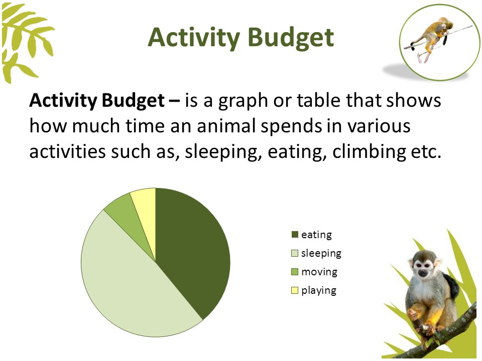 Activity Budget – is a graph or table that shows how much time an animal spends in various activities such as, sleeping, eating, climbing etc.