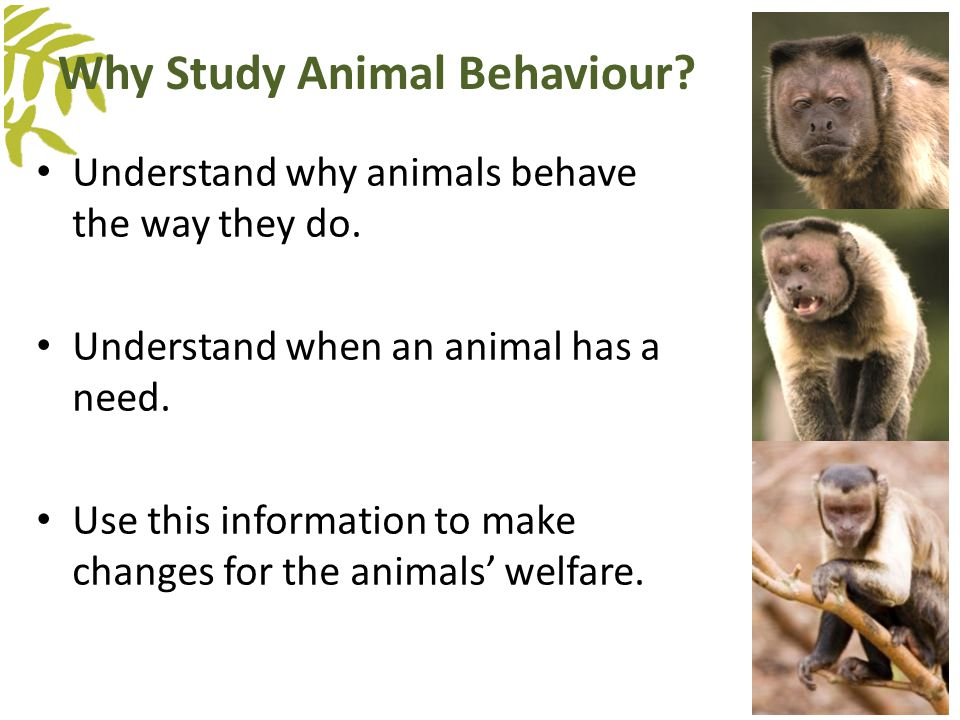 Why Study Animal Behaviour? Understand why animals behave the way they do. Understand when an animal has a need. Use this information to make changes