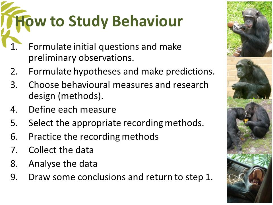 How to Study Behaviour 1.Formulate initial questions and make preliminary observations. 2.Formulate hypotheses and make predictions. 3.Choose behaviou